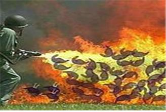 비둘기 태워죽이는 장면