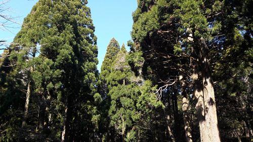 꽃가루 나무.JPG