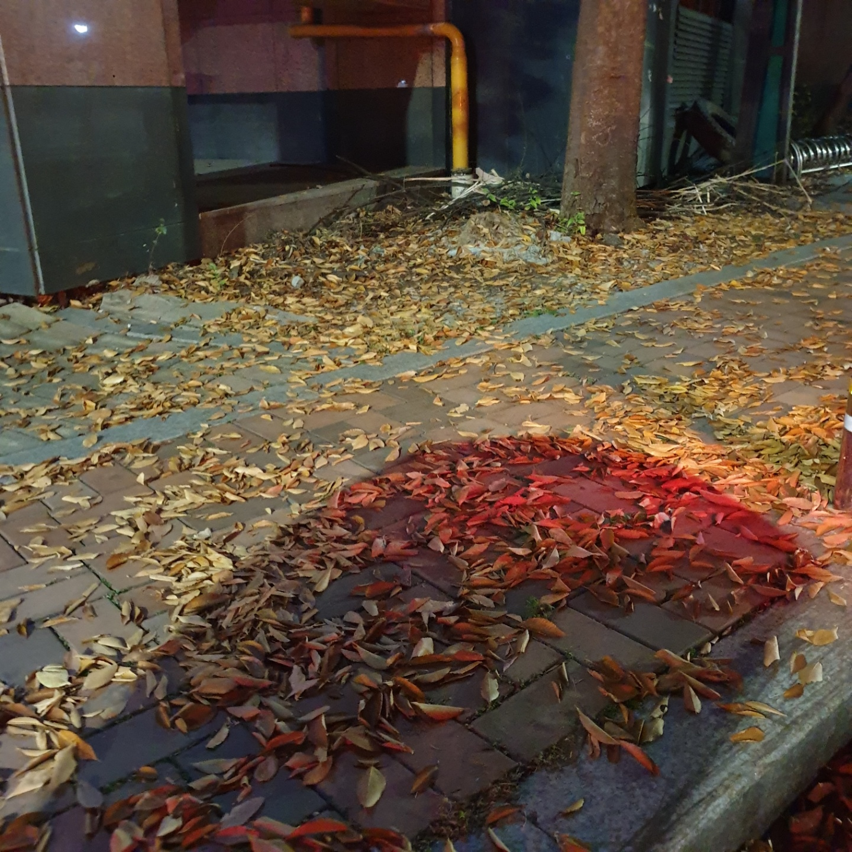 낙엽.jpg