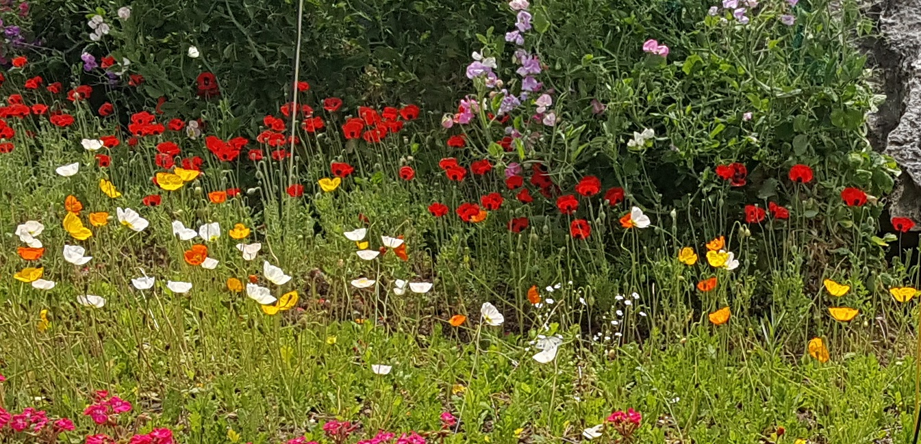 나비, 꽃밭.jpg