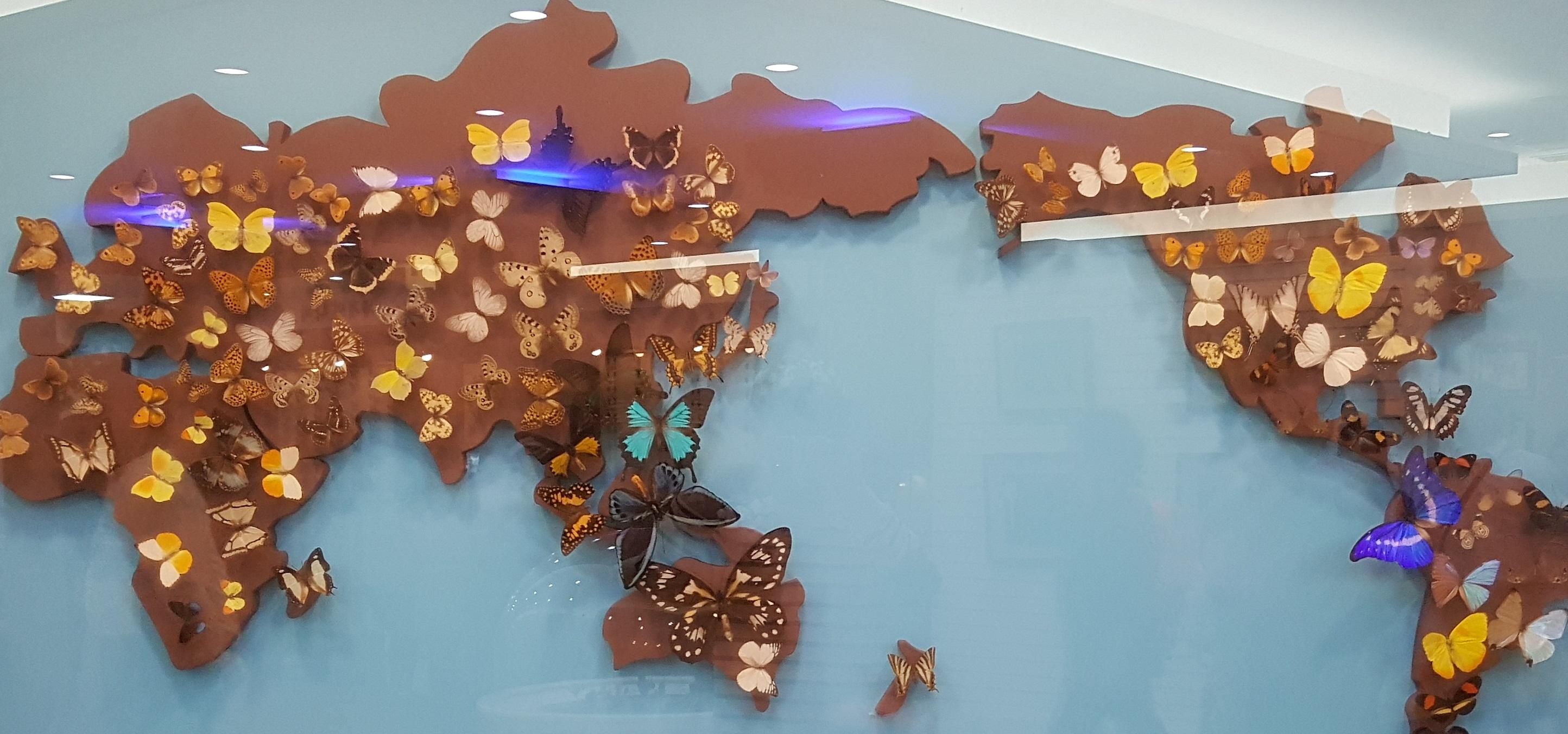 나비 전시물.jpg