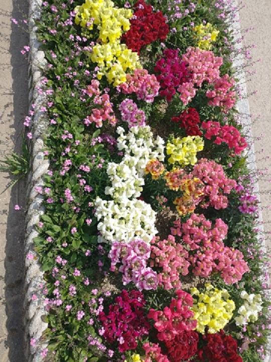 꽃1-1.jpg