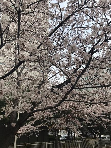 봄3.jpg