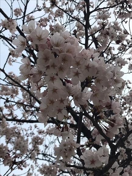 봄2.jpg