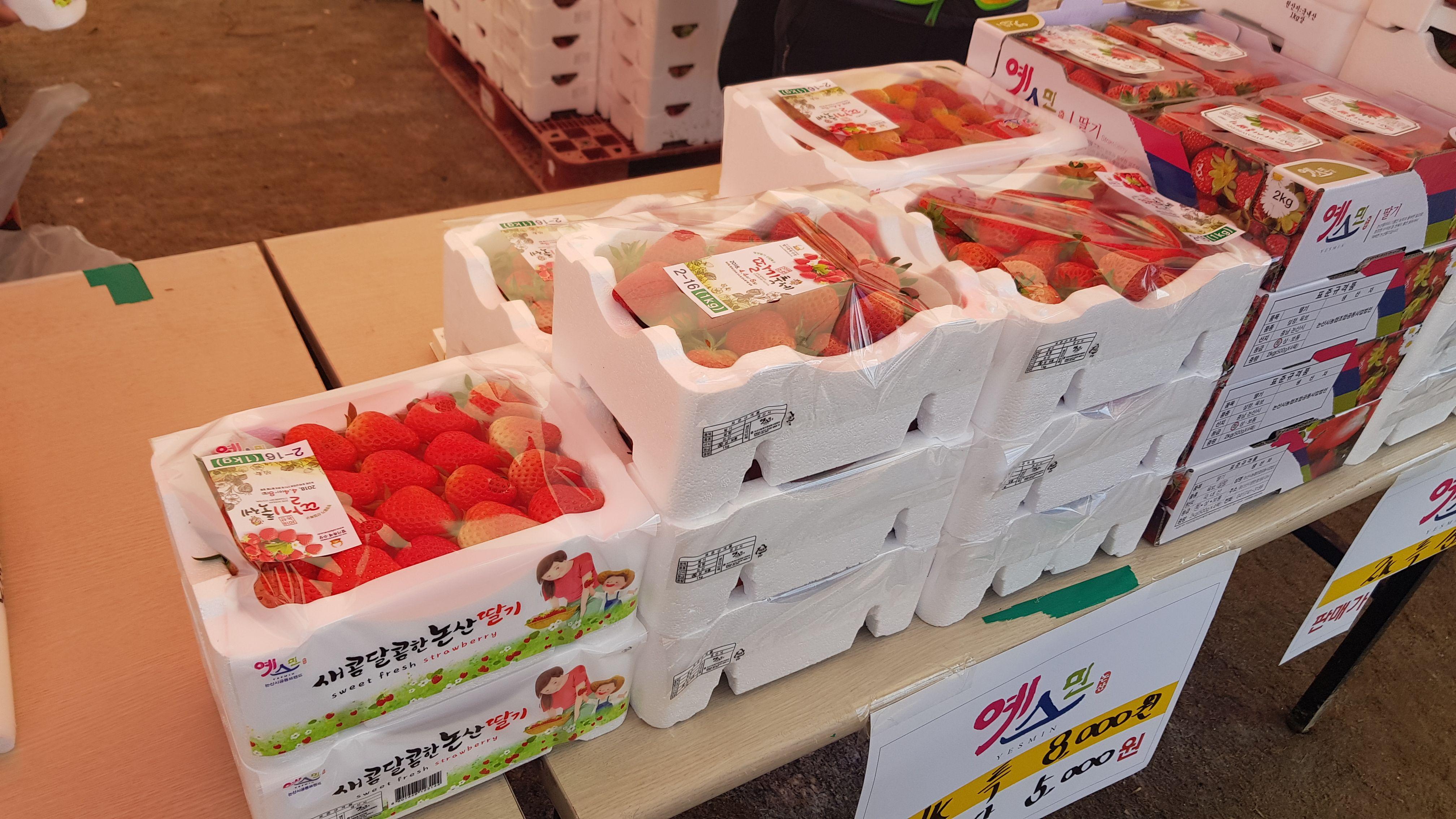 딸기축제2.jpg